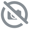 fruit sec d'argousier